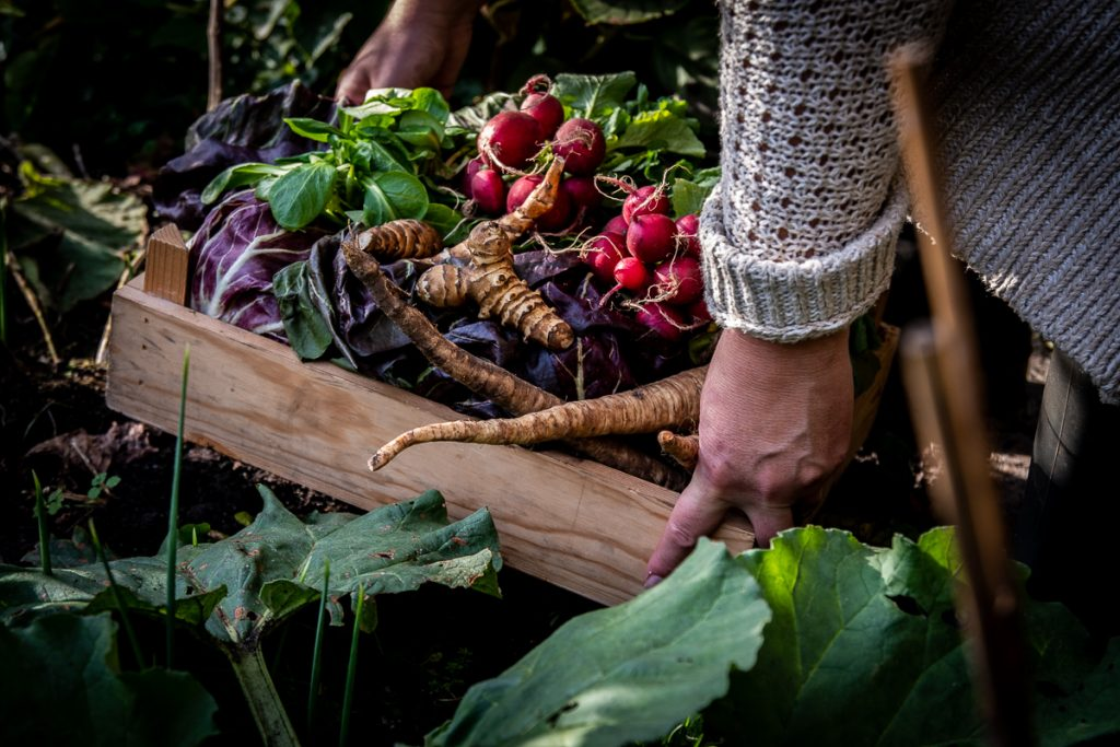 Wilde Wortels Utrecht - biologische catering en workshops & masterclasses over natuurvoeding - moestuin Westbroek